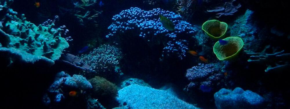 Bienvenidos al Universo Marino de AlSkin Marine Science Skin Care
